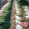 흙대파1단(1kg이상)/깐대파/파채/간편대파/양파/깐마늘/산지직송/국내산