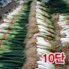 흙대파10단(1kg이상)/깐대파/파채/간편대파/양파/깐마늘/산지직송/국내산